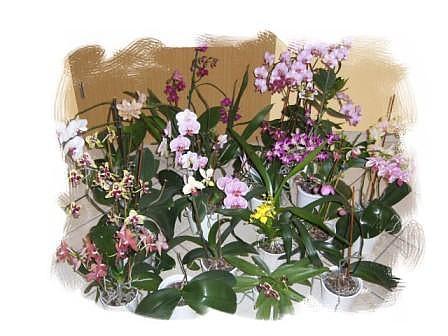 Orchideengruppe