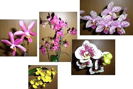 Orchideenkollage I